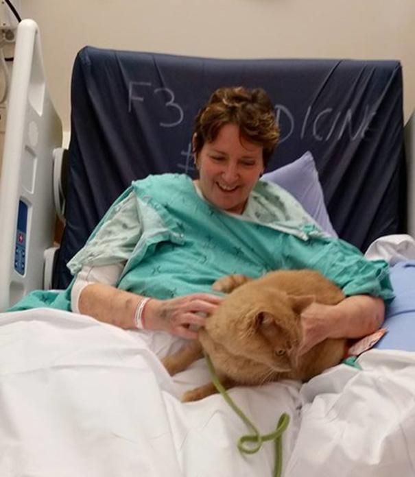 Hospital permite visitas de mascotas