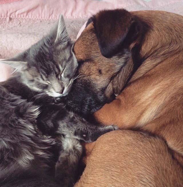 Jinx cuida a Toby