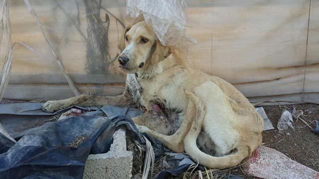 Leo, perro rescatado en Almería