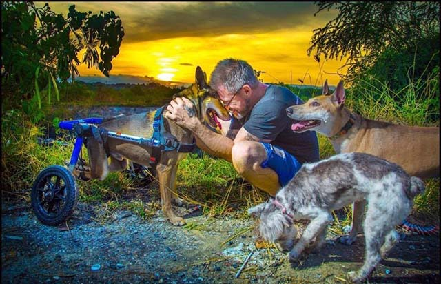 Michael alimenta perros callejeros