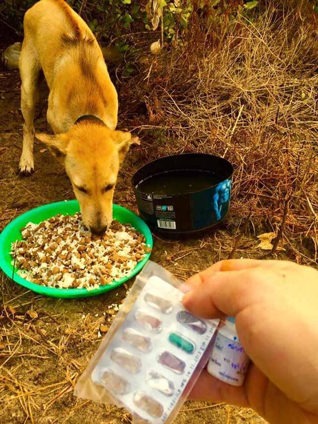Michael brinda medicamentos a un perro