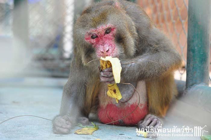 Mono comiendo banana