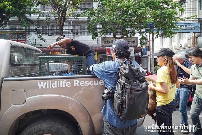 Mono llevado al refugio