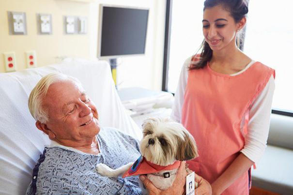 Pacientes visitados por sus mascotas