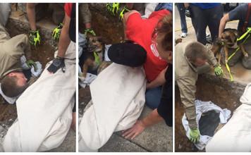Rescatan a un perro atrapado en desagüe