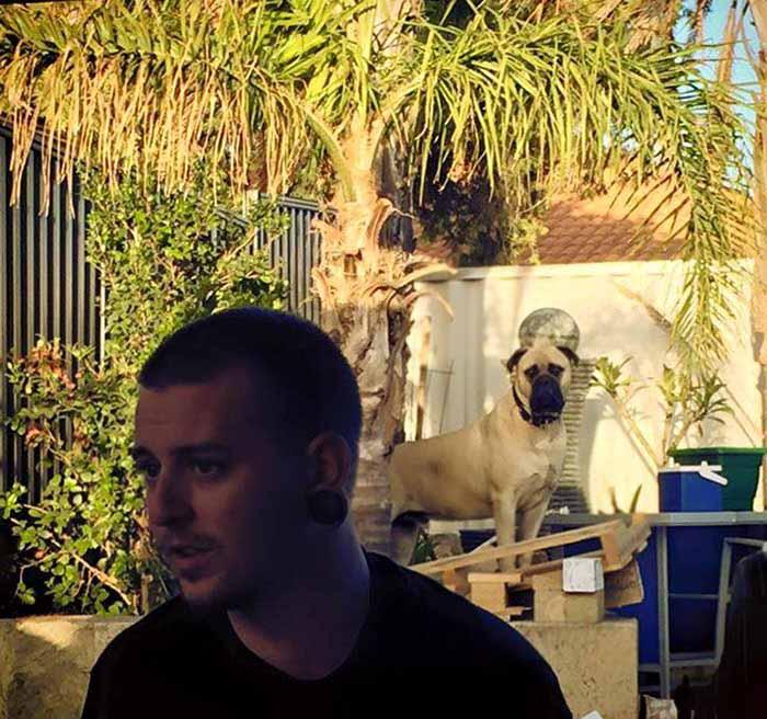 Perro espía en el patio
