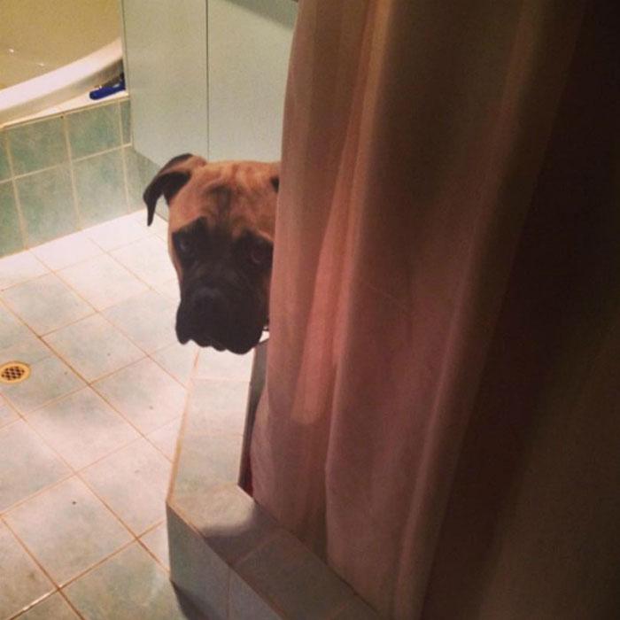 Perro espiando en la ducha