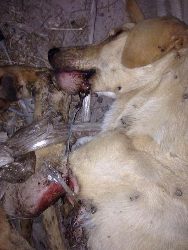 Perro maltratado en Almería