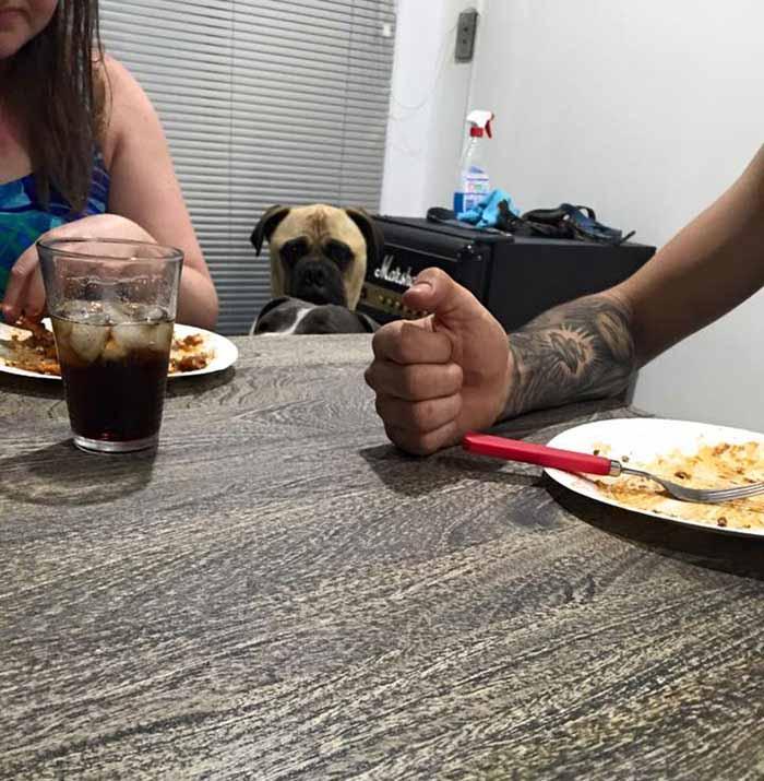 Perro observando en la cena
