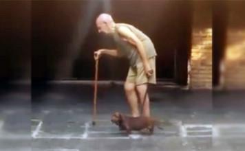 Perro paciente camina al ritmo de su humano