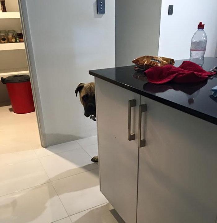Perro quiere tanto a su humana que la espía en todo momento