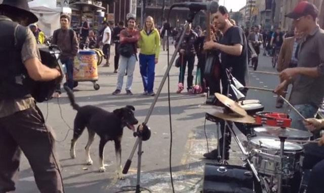 Perro se divierte con un grupo de músicos