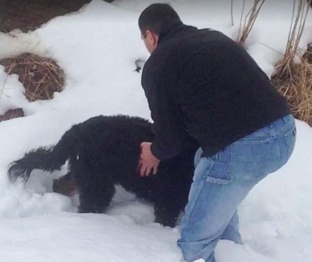 Perro se reencuentra con su humano