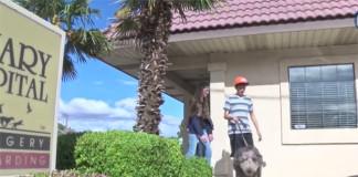 Perro sobrevive a una caída de 300 pies