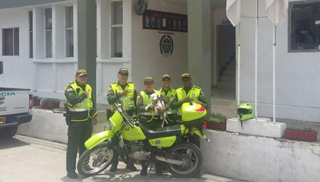 Perro y policía