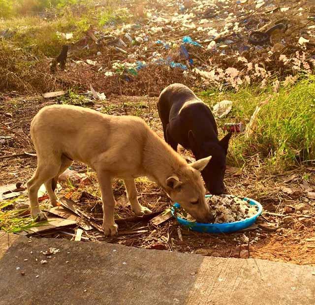 Perros callejeros en Tailandia