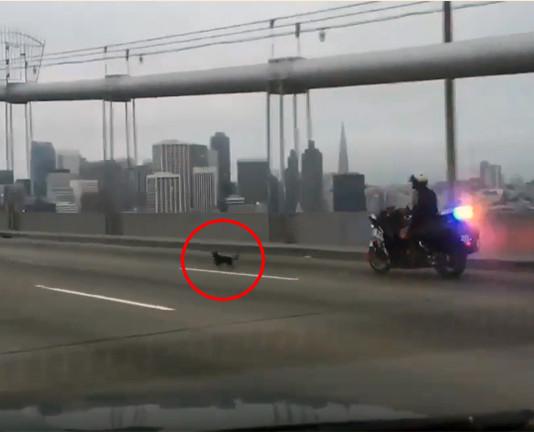 Policía persigue a un pequeño perro