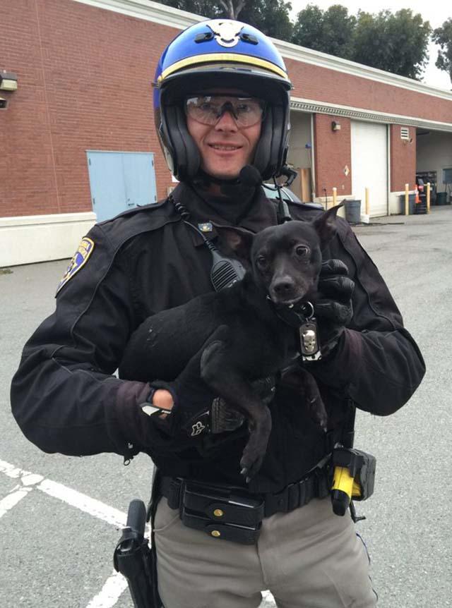 Policía salva a un perro