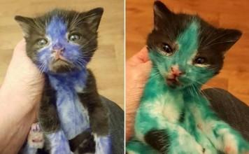 Rescatan a dos gatos coloreados con marcador permanente
