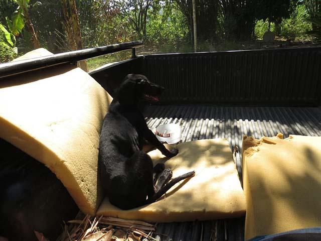 Rescatan a perra callejera