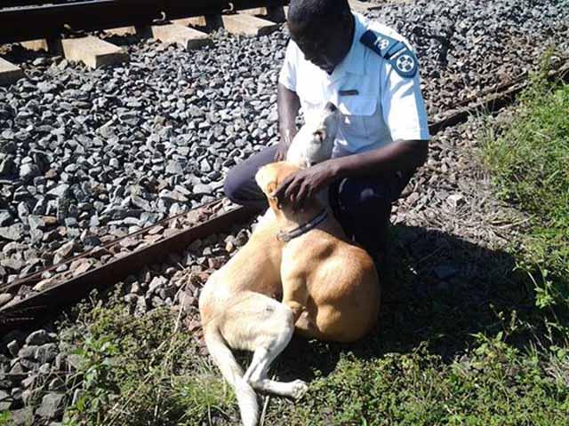 Rescate de perros arrollados por un tren