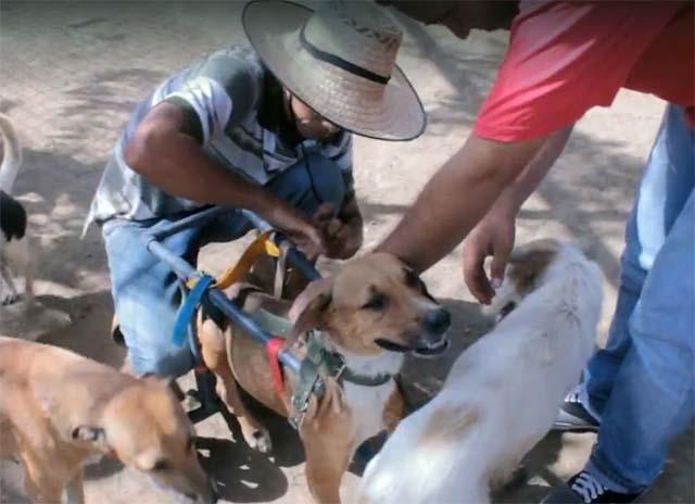 Toto con su silla de ruedas