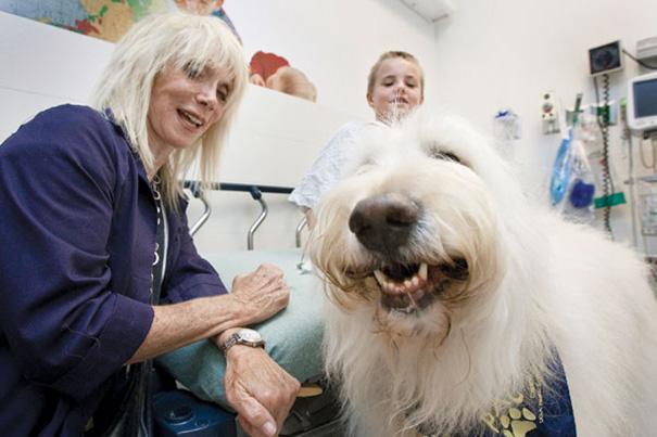 mascotas visitan pacientes
