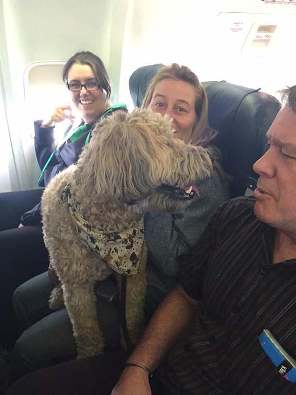 Aerolineas permiten a las mascotas viajar con su familia en la cabina