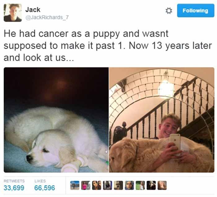 Antes y despues de su perro