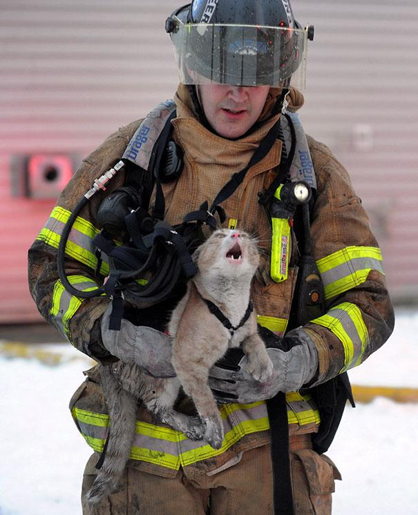 Bombero rescata a un gato
