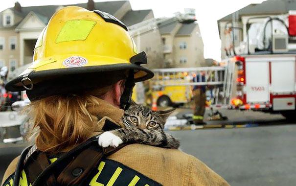 Bomberos salvan a un gato