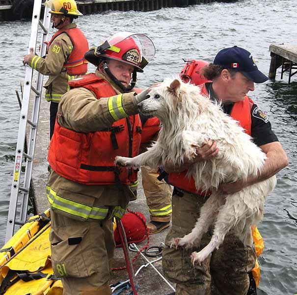 Bomberos salvan a un perro