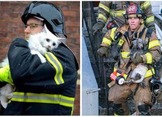 Bomberos salvan animales arriesgando sus vidas a diario