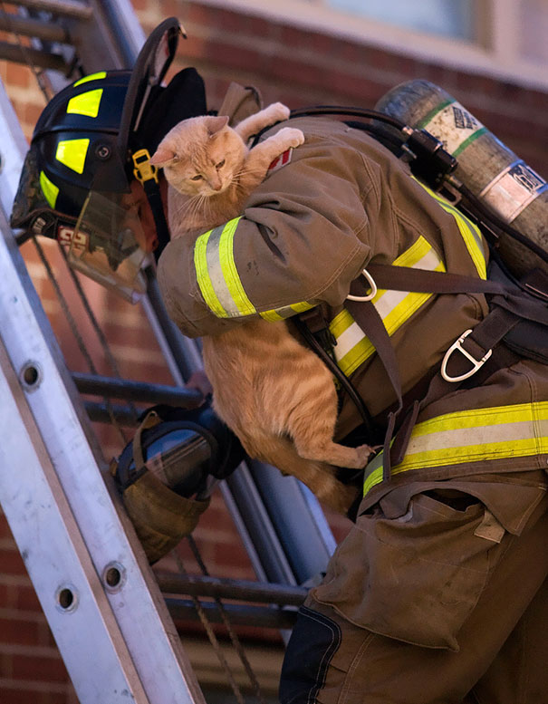 Bomberos salvan animales