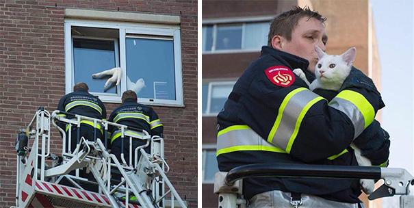 Bomberos salvan gato en edificio