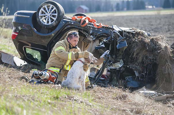Bomberos salvan perro en accidente automovilístico