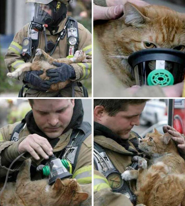 Bomberos salvaron a un gato con máscara de oxígeno