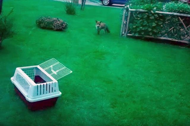 Cachorro liberado
