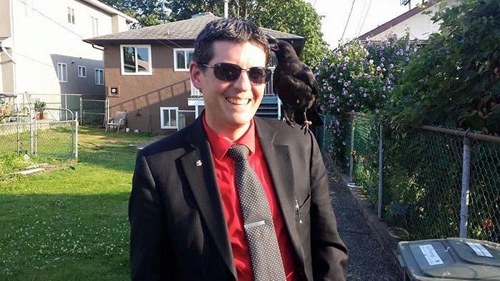 Cuervo resatado convive con humanos
