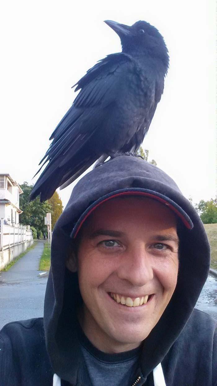 Cuervo rescatado y su padre humano