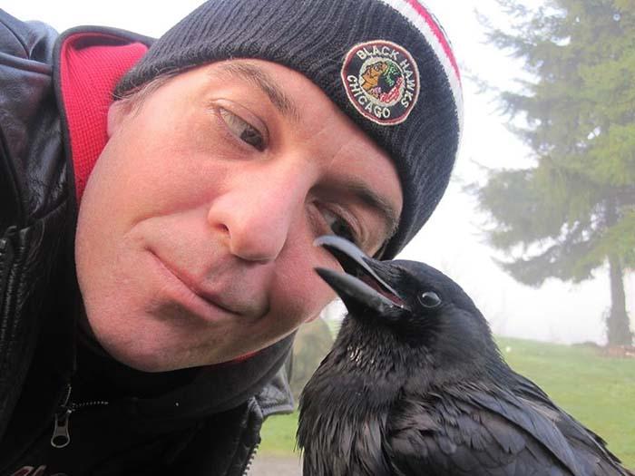 Cuervo rescatado