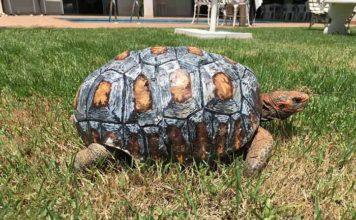 Freddy la tortuga tiene caparazon en 3D