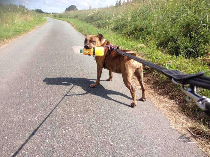 Freya dando un paseo