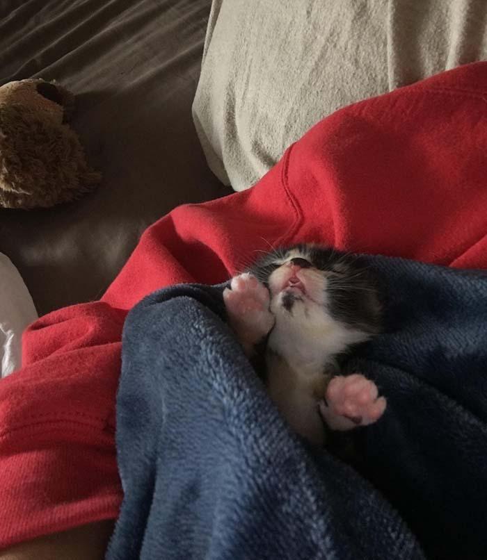 Gatito huerfano encontrado