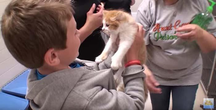Gato adoptado