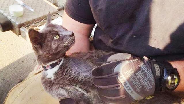 Gato se escondio en la estufa para refugiarse de las llamas