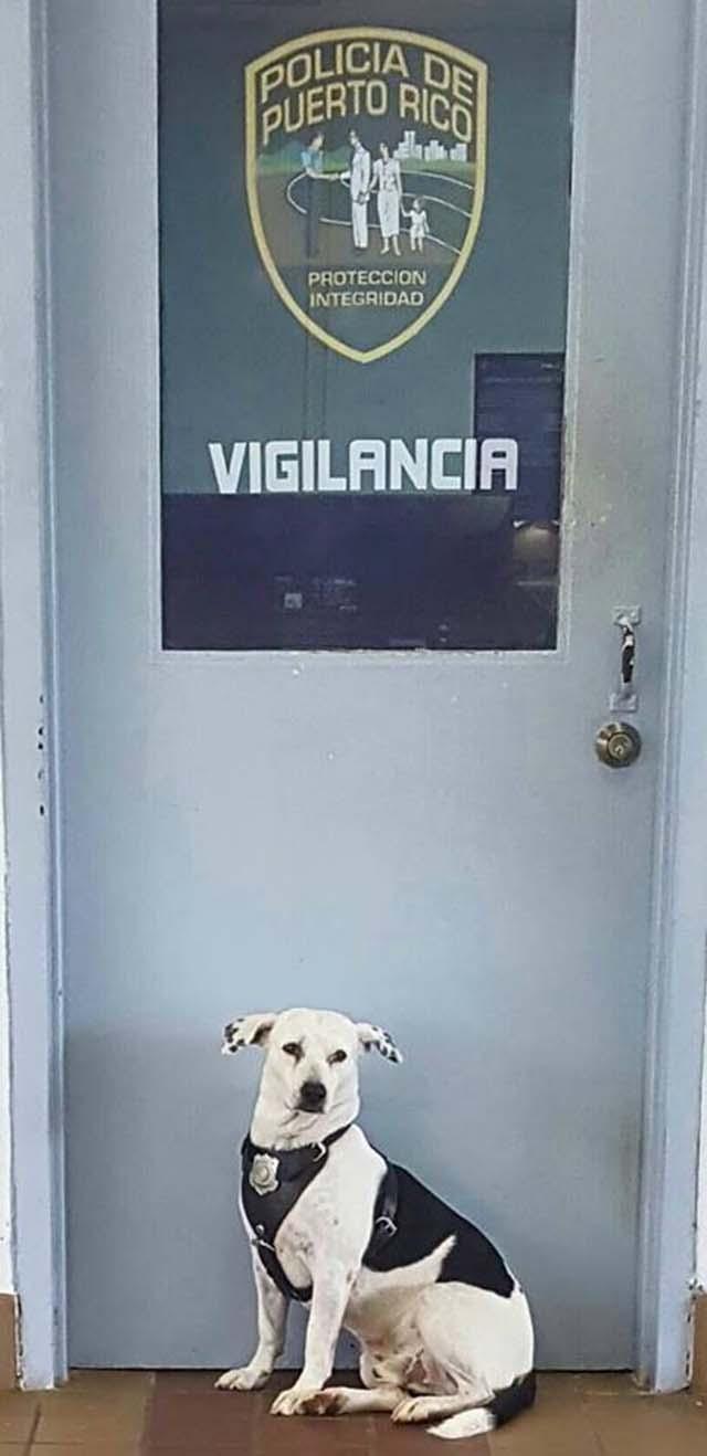 Gorgi, el perro de vigilancia