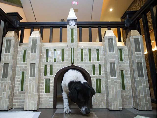 case albergo abbandonato i cani per loro in adozione