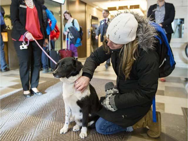 Gli ospiti a piedi cani per l'adozione
