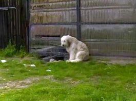 La verdadera historia del perro abandonado y triste que espera a su humano